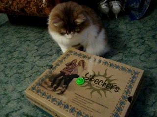 Реакция кошки Алисы на игрушку из Киндер-сюрприза (для группы мой питомец)