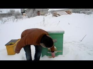 Канди для пчел. Приготовление канди. подкормка пчел зимой.
