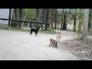 кошки против собак. приколы с животными