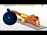 Adductor exercises _ Pushes on swiss ball for inner thighs