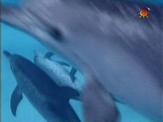 41 Глазами дельфина