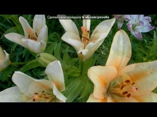 «Мои цветы» под музыку Джо де Сен - lete indien (настольгия). Picrolla