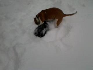 Bella u Motya v snegy