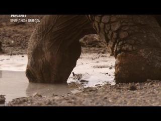 Animal Planet_Галапагосские острова (ч. 1)