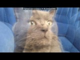 ((Мой любимый кот)) под музыку ОЧЕНЬ смешная песня - Про кота. Picrolla