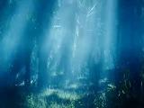 джунгли 2012 приключения комедия в ролях: сергей светлаков и вера брежнева