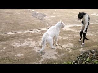 кошки приклы