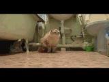 Кот гад