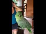 Заразительный смех попугая
