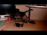«Мой котик» под музыку селин дион(просто музыка без слов) - песня из титаника)). Picrolla