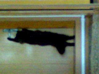 Как мой кот открывает дверь когда хочет поссать
