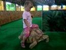 А теперь покатай меня, большая черепаха)))