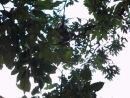 Парк обезьян Арасиямы 26 10 2013