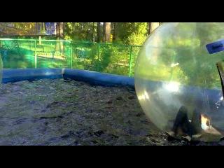 Мы в шарах=) Парк Белинский. Лето 2012 г.