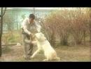 Туркменский волкодав