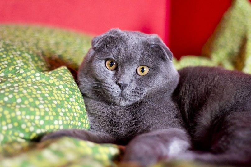 Картинка пухлого кота
