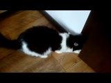 Моя котя открывает дверь и валит от меня :DD