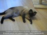 Моя кошка Герда. Хочет кота (Звук с 45 сек.)