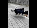 ебля собак около дверей школы поселка Селекционной Станции!!! жесть смотреть всем!!!!!!!