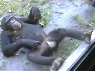 пьяная обезьяна Батыр Алиев отжигает