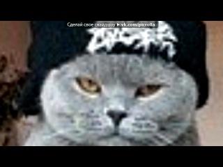 кисы под музыку ✔Вера Брежнева Любовь Спасёт Мир Я знаю пароль я вижу ориентир Picrolla