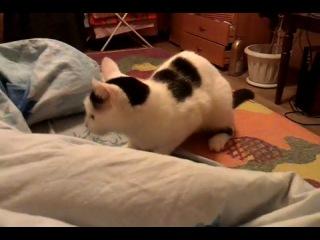 Как кошка охотится за рукой