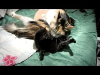 Серый и черный котята