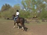 Я на съемках конюшни