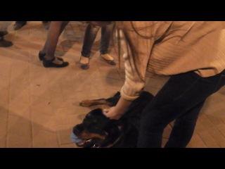 20 апреля - игры с собачкой)