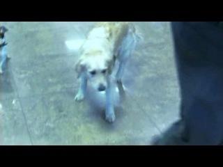 Собачья работа / Серия 7 из 8 (2012)