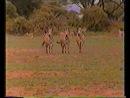 Zateryannye_V_Afrike