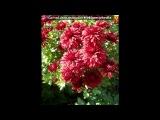 «красота» под музыку ☜♥☞ Romantic Collection - А.Бандера - Жемчужная улыбка. Picrolla