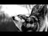 «Волк-одиночка» под музыку Агата Кристи и Би-2 - Мы не ангелы, парень