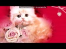 «Красивые Фото • fotiko» под музыку Детские Песни - Кис-кис-кис-киса, киса-кисуня....
