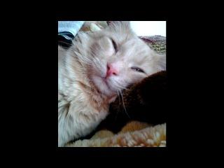 пушистый под музыку тебе мой котик мур мяу муррр Picrolla