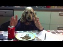 Dog eating with human hands (Not Vine)