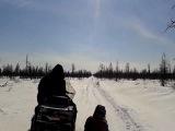 Север охота на северного оленя