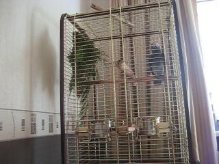 Попугай ЖАКО- Тиша- поет(банана-мама)