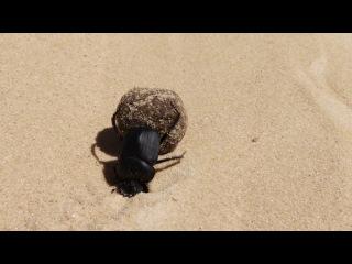 BBC Африка / Africa 05. Сахара (2013) HD