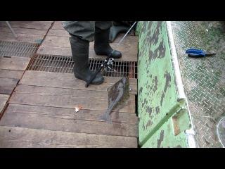 Рыбалка в тихом океане