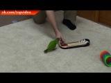 Я в шоке, чему парень попугая научил.