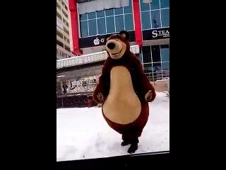 Нохчи медвед