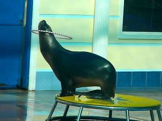 Дельфинарий п.Небуг