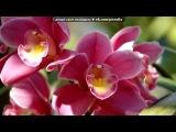 «танец цветов» под музыку Bonu - Qora Tun - Перуанская Флейта Кена (так-же её обзывают: Индия-Музыка ветра, Древняя Азербайджанская музыка, Флейта Кавказа, Индейская этника, очень красивая узбекская песня,  Грусть о тебе из кф