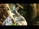 Big Buck Bunny.2008