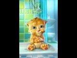 Няшный котёнок умывается♡♡♡