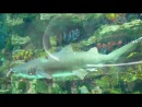 Аквариум в Океан-Плаза