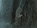 Ёжик в тумане - узелок
