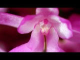 2 из 3 - BBC: Как вырастить планету: Сила цветов /How to Grow a Planet./ 2012