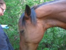 ...однажды в лагерь пришла тетя-лошадь, и девочки пошли ее кормить))